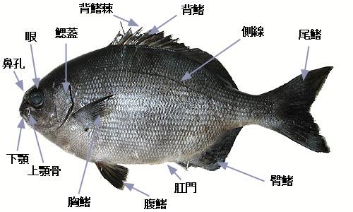 魚の体各部の名称